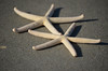 LCP starfish-101 (2)
