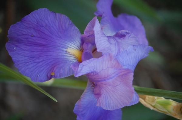 TK-purple-DSC_0006