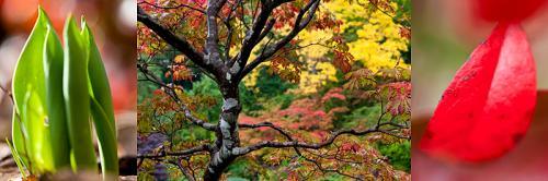 KM-Autumn Garden 1