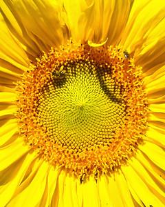 FYellow Flower