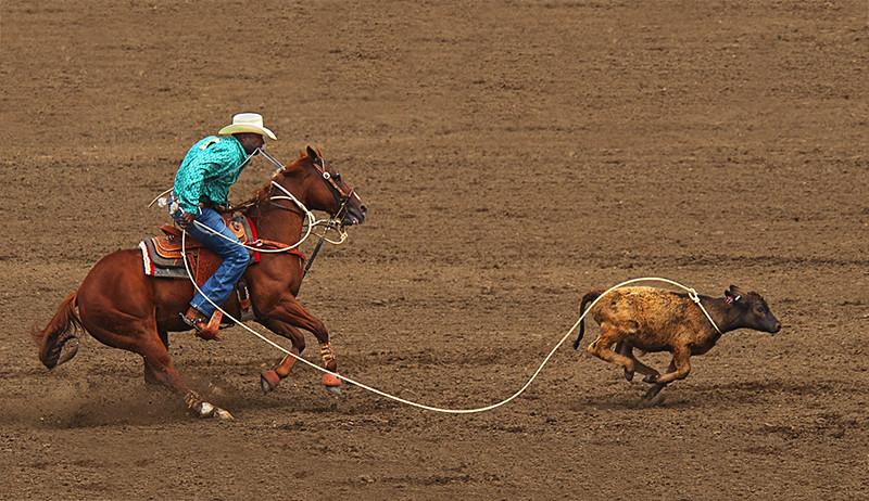 Roping calf at Salinas Rodeo.