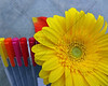 Markers with Gerber Daisy 1