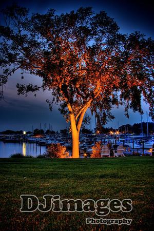 Great Oaks Tree