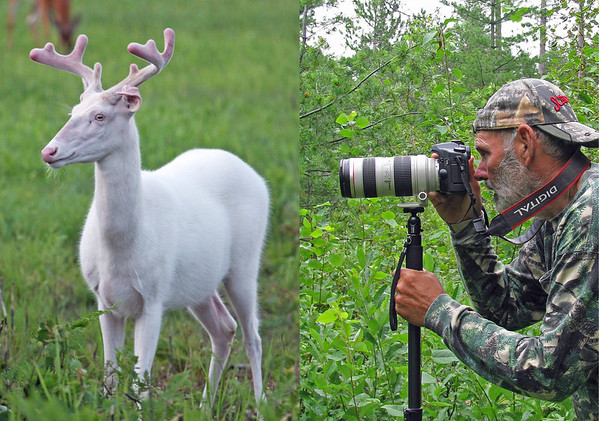 """  Photographing Albino Deer of Boulder Junction Wisconsin """