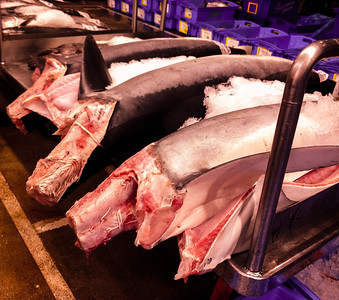 Headless sharks at the Sydney Fish market. To read why the heads are cut off visit my blog http://bit.ly/KAfoLD