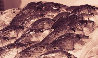 Fishies everywhere