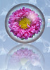 "Bubble Flower reflection following tutorial by Gavin <br /> <br />  <a href=""http://www.youtube.com/user/PhotoGavin#p/c/13E73F9C73ED4E17/11/QRkM6Z1PBCA"">http://www.youtube.com/user/PhotoGavin#p/c/13E73F9C73ED4E17/11/QRkM6Z1PBCA</a>"