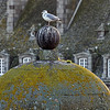 Bird on a ball, Seagull sitting on a dirty ball insida an old castle, Downtown, Saint-Malo, Bretagne, France; © Joerg Muehlbacher