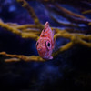 Pink Fish, Aquarium, Saint-Malo, Bretagne, France; 0