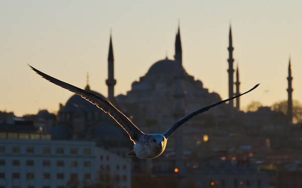 Seagull in front of mosque