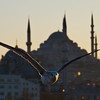 Seagull in front of mosque, Seagull flying majestically in front of Yeni Cami and Suleymanie Mosque over Bosporus in Istanbul, Bosporus, Galata, Istanbul, Turkey; © Joerg Muehlbacher