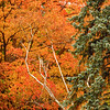 Fall Colours (6)
