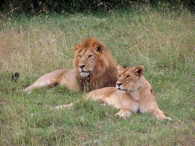 Lion King & Queen