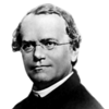 Gregor Mendel (1822-1884)<br /> <br /> An Austrian scientist who gained fame posthumously as the founder of genetics. Mendel first demonstrated that the inheritance of traits in pea plants followed a distinct patter, now referred to as the laws of Mendelian inheritance. The importance of Mendel's work was not recognized until the turn of the 20th century, but the rediscovery of these laws formed the foundation of modern science genetics.