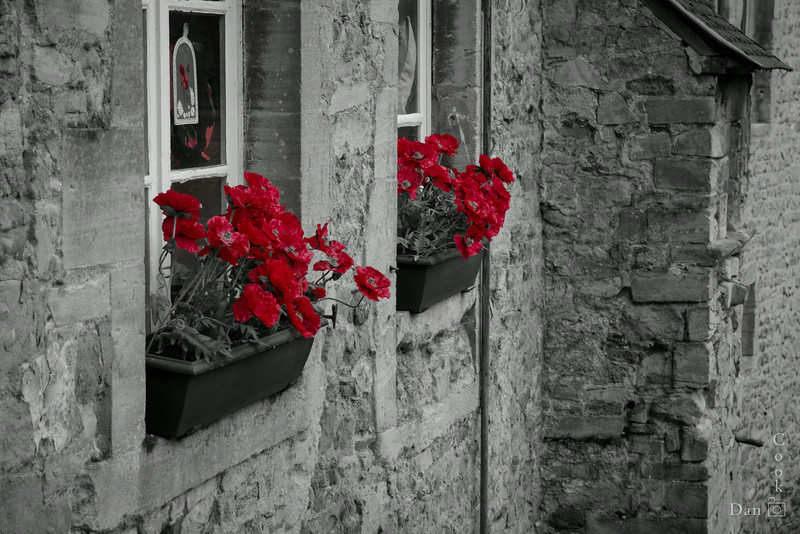 Poppies in a window box in Bayeux, Normandy, France