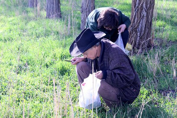 Picking wild spinach