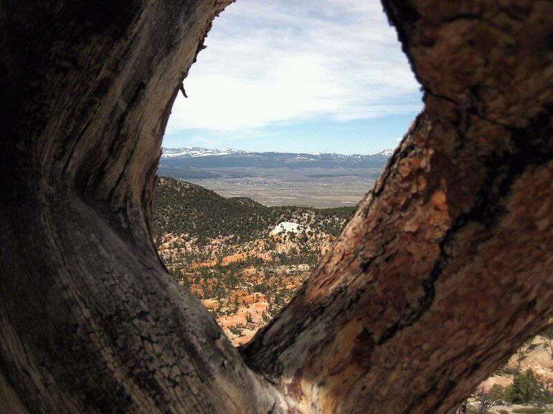 Tree in southern Utah