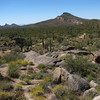 Phoenix Desert, Arizona