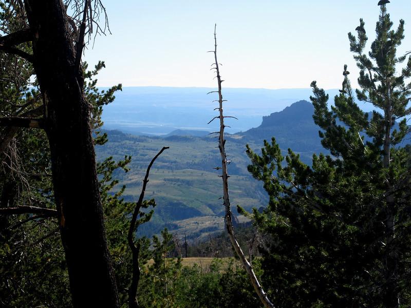 Trees in Southern Utah