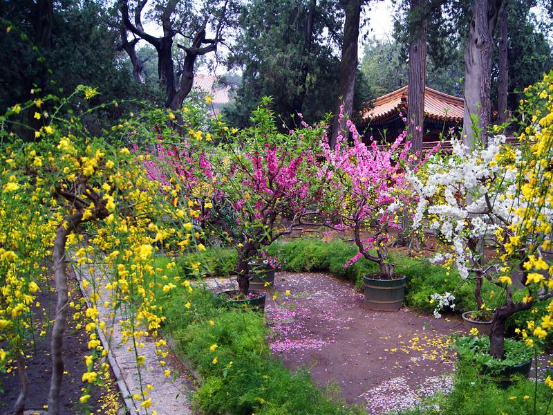 Garden, Beijing China.