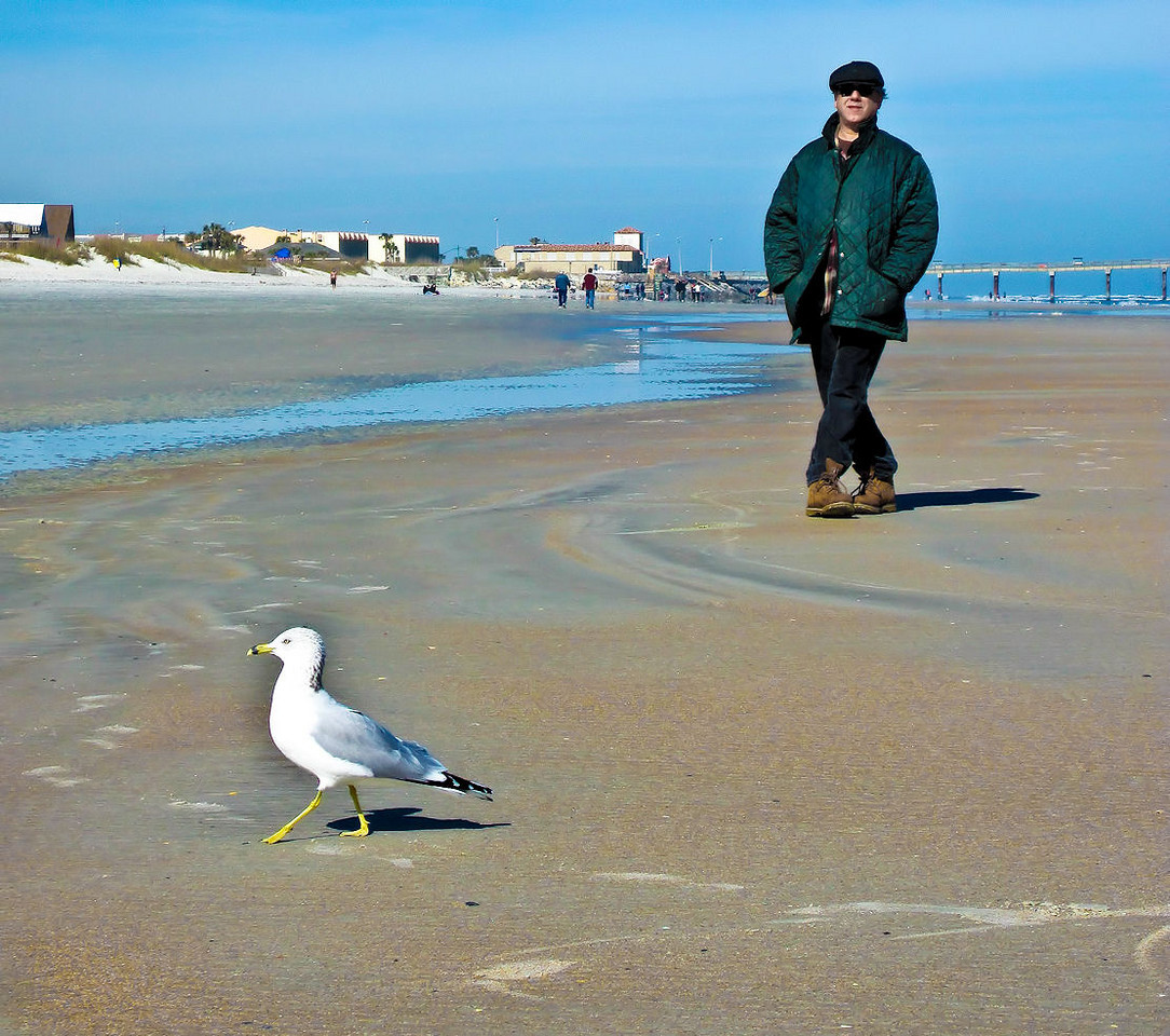 Dec 21<br /> Back to the beach after a couple chilly weeks of Winter. Joe dances with the Ring-billed Gull. Happy solstice everyone. The days begin to get longer now! Joe watched the lunar eclipse last night through the skylight which I thought was a pretty luxurious way to see it. He would call to me at intervals to come see, but at 3 in the morning I was too cozy under the covers. What's another 450 years anyway?