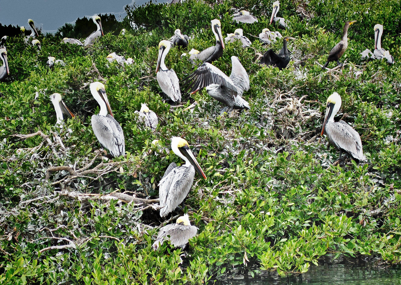 Feb 8.<br /> So, it has been three weeks of picture drought. I have recovered mostly now from mid-winter mucus-y mess and am feeling healthy once more. Last week my mother and I started the 2nd module of the Master Naturalist program: the coastal module. Lots of boat rides and Pelicans to look forward to.