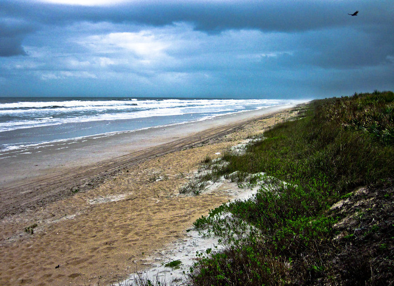 March 4<br /> <br /> A windy overcast day on the Cape Canaveral Seashore where I went for coastal class. Vulture making lazy loops on updrafts scans the sand for decay. A wild and raw beauty where the sea meets the shore.