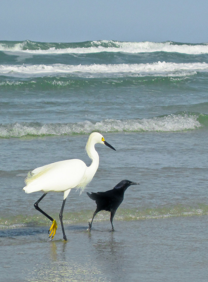 Cinco De Mayo<br /> <br /> Although from different worlds, these two walked together down the beach feeding and preening along the way in perfect synchronicity.  Alas, their friendship was brief as they were torn apart by un-accepting peers and circumstance.