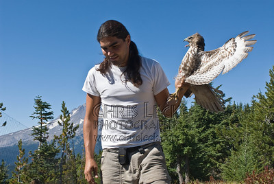 Indignant Red-Tailed Hawk about to get measured, banded, and released