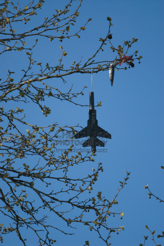 Airplane in Tree