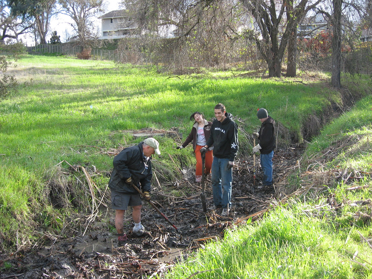 Habitat Restoration at Heather Farm Park - Removing cattails