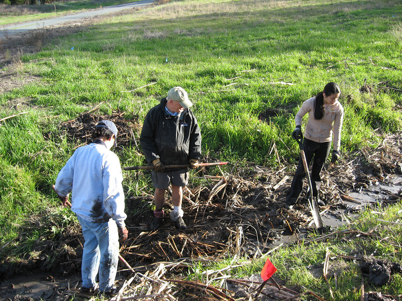 Habitat Restoration at Heather Farm Park - Removing cattails<br /> with Joan Tomansini's youth group