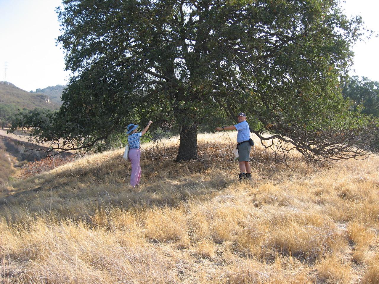 Habitat Restoration in Lime Ridge - gathering acorns