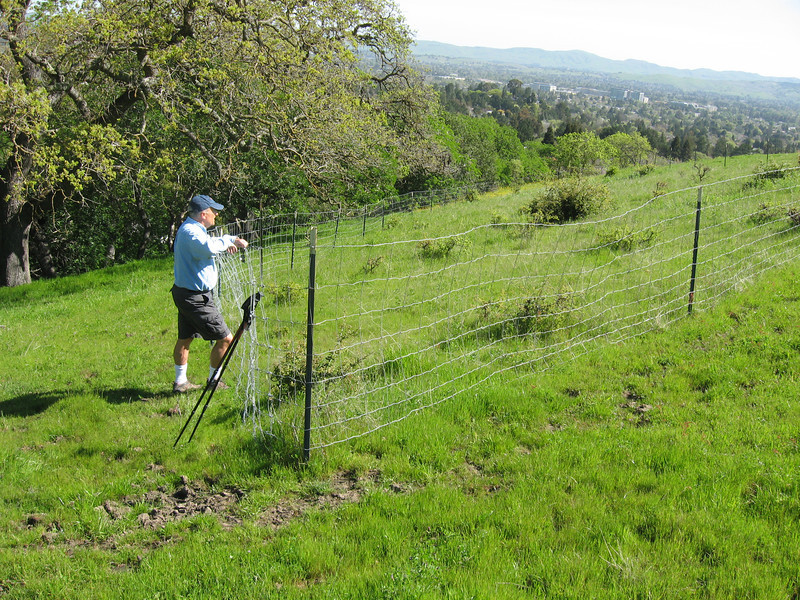 Habitat Restoration in Acalanes Open Space - a fence to protect oak seedlings from cattle.