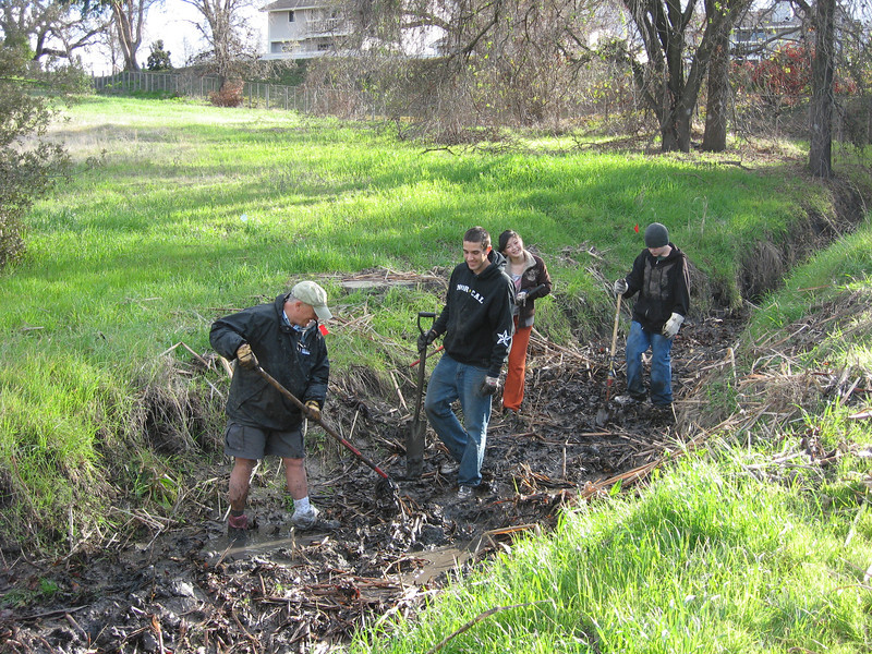 Habitat Restoration at Heather Farm Park - Removing cattails
