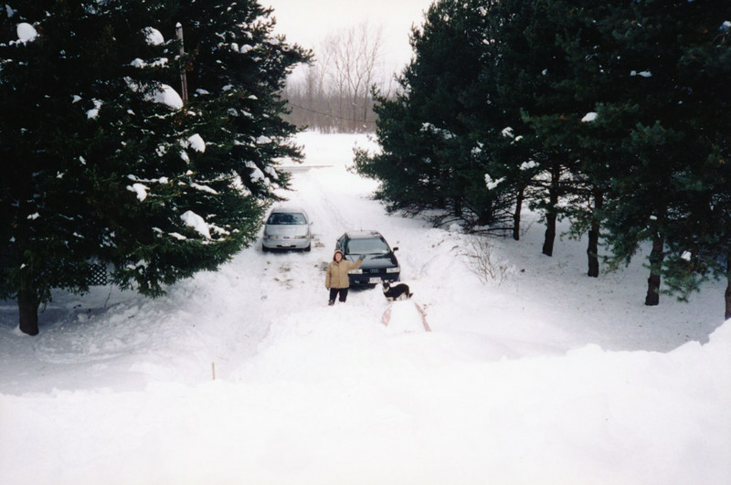 0  2000 Winter Pine Grove