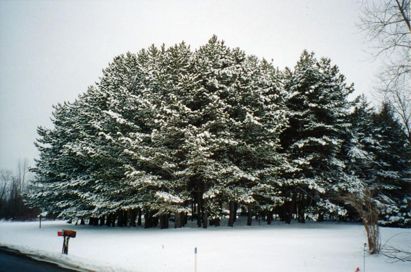 0  2004-03 Pine Grove 1