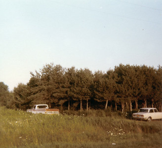 Pine Grove 1970s to Today