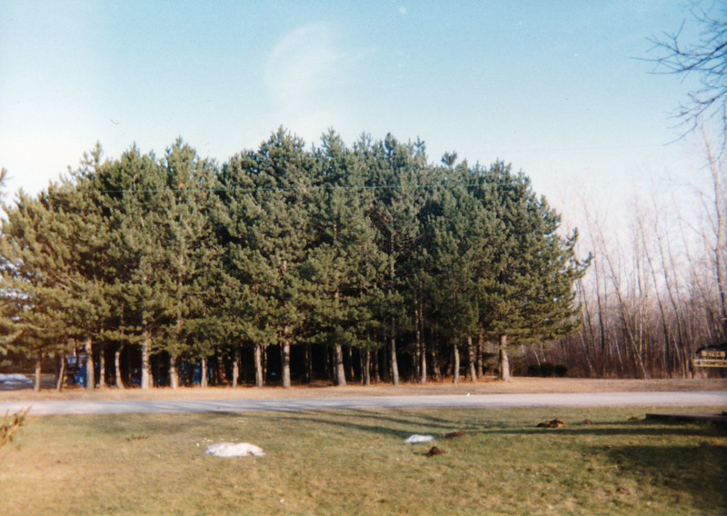 0  1990 ish Pine Grove