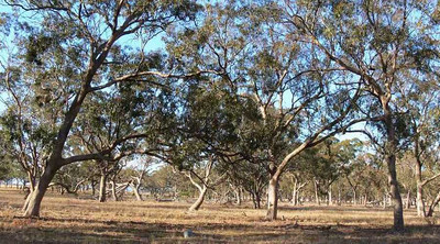 Pinkerton Forest
