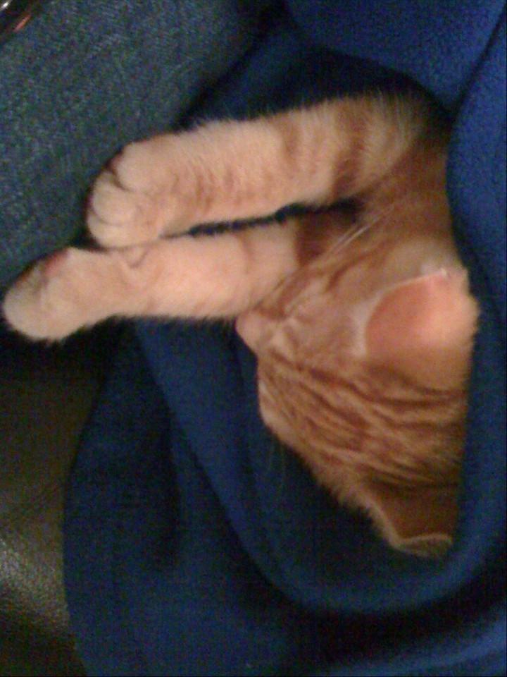 Random cat pic #2