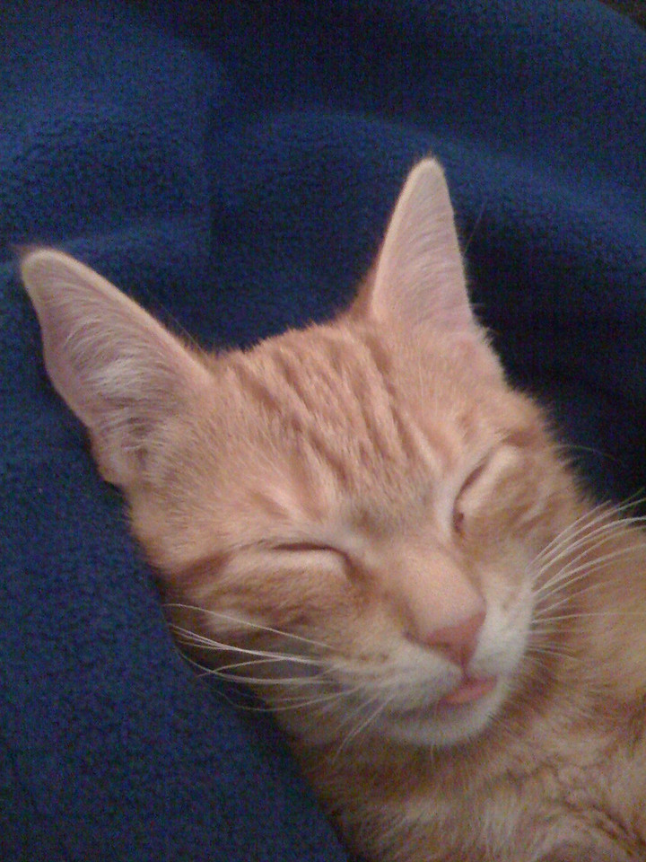 Random cat pic #3