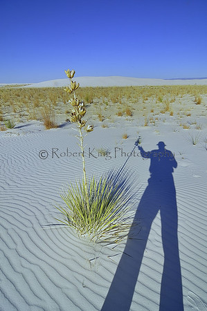 See the White Sands National Monument images in the galleries section.