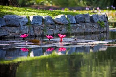 Mount Coot-tha Botanic Gardens, Brisbane.