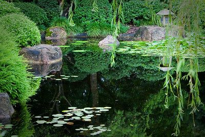 Mount Coot-tha Botanical Gardens, Brisbane.  (This is the Japanese Garden)