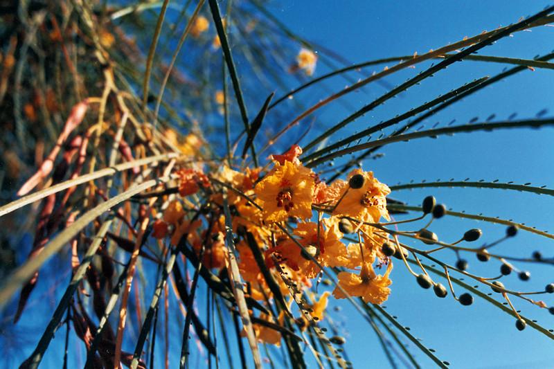 Date Flower 2