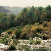 Dates in the Wadi