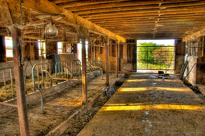 Martha's Milking Barn