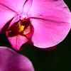 Plant/Floral :