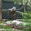 Mohan and Majestic in their enclosure.  They came to Las Vegas as cubs in July of 2010.